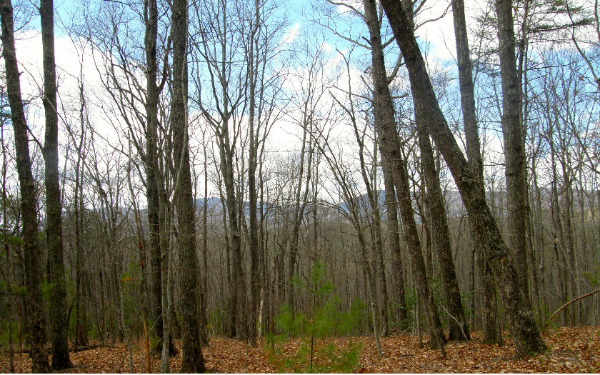2.7AC  CANTOWN RD