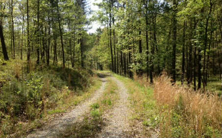 62 ACRES COUGAR LANE, ELLIJAY, GA