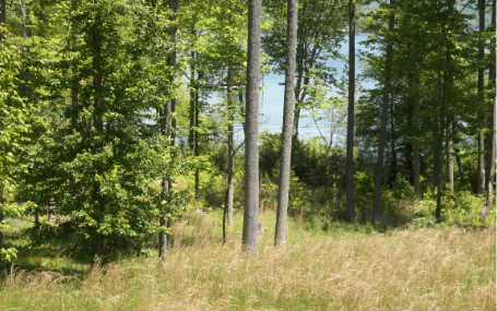 LOT21  CYPRESS POINTE, HAYESVILLE, NC