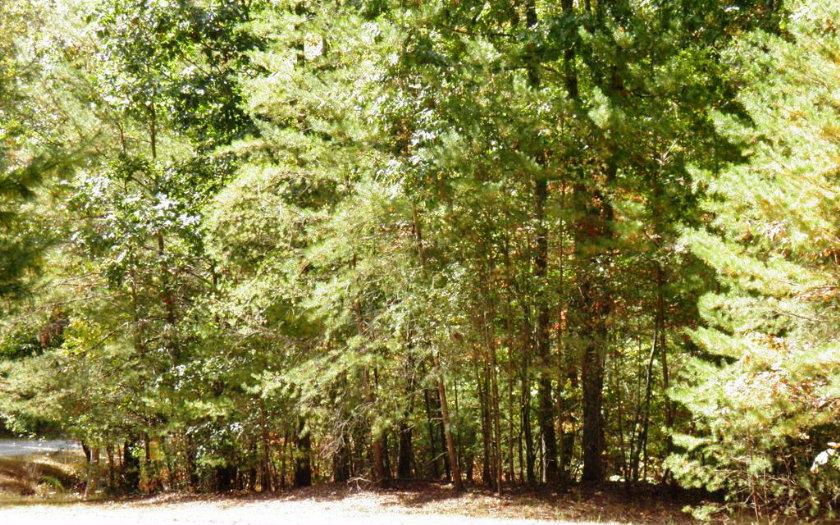L353  DANCING TREES TRAIL
