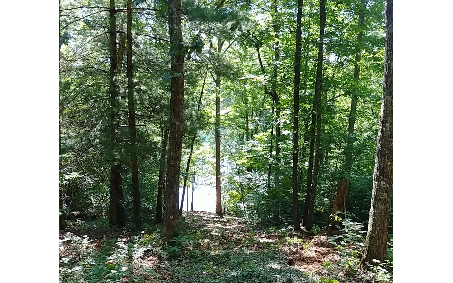 LOT 9 FOREST DRIVE
