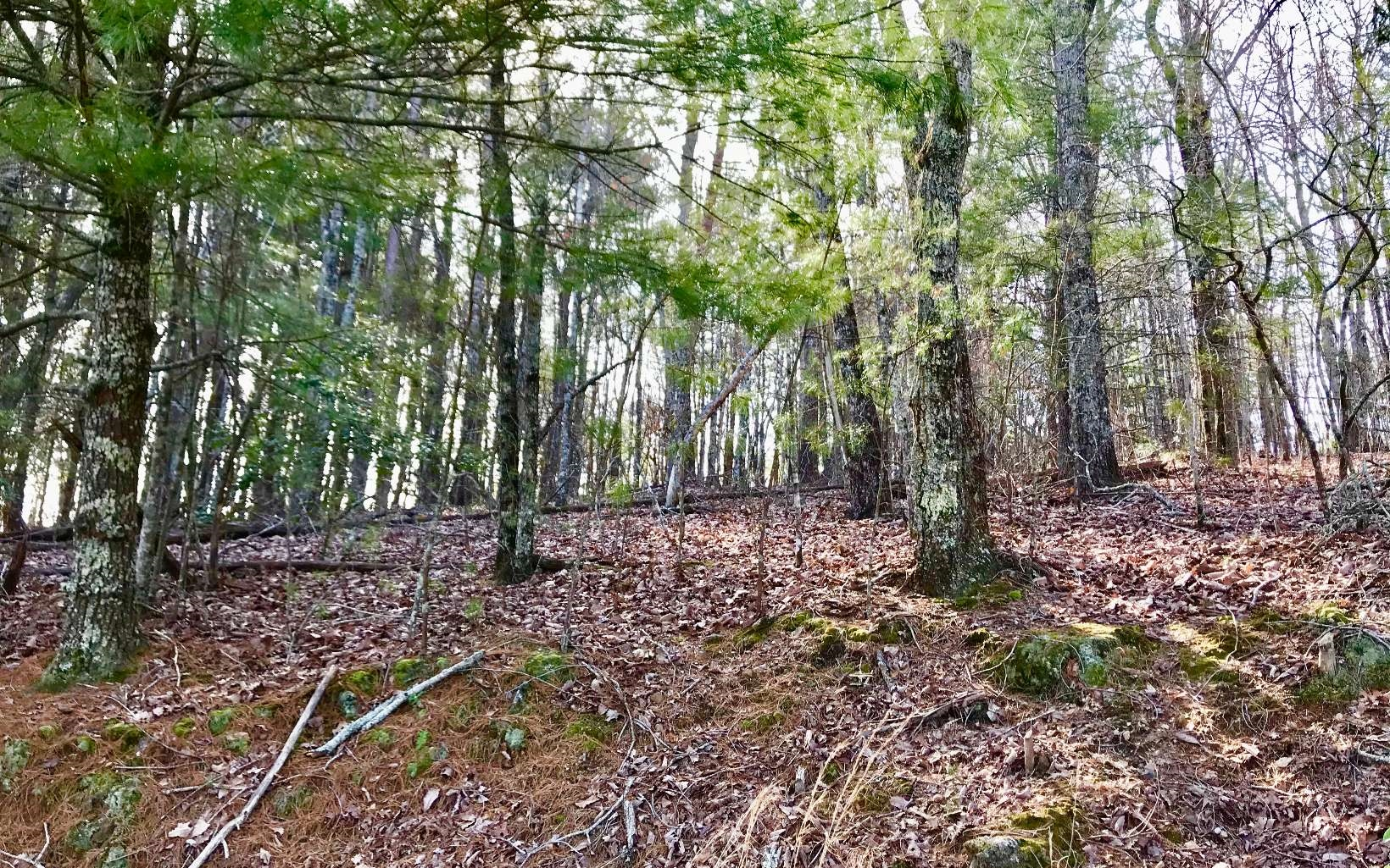 LOT4  SQUIRREL HUNTING RD