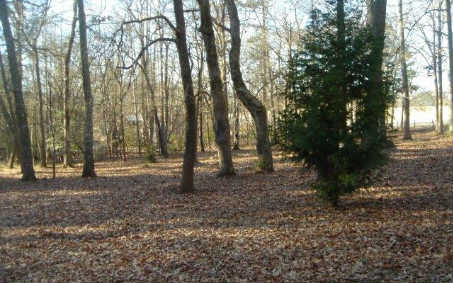 LT 4  FOREST CIRCLE, BLAIRSVILLE, GA