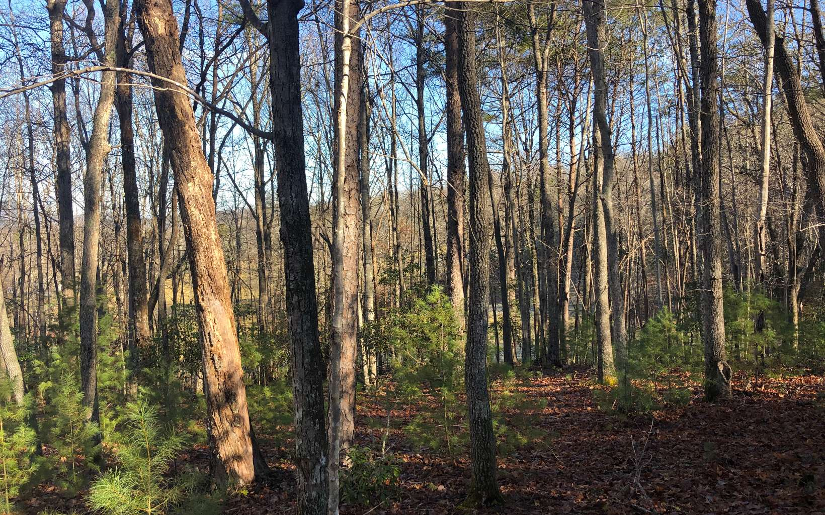 LOT 5  HEMLOCK RIDGE