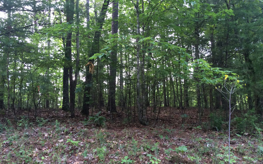 NC mountain property GOLF COURSE CR,Murphy,North Carolina 28906 ,Vacant lot For sale,Vacant lot,259829 mountain real estate