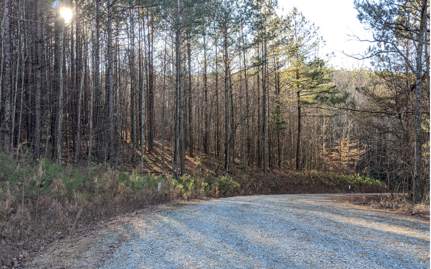 10 AC  REECE MOUNTAIN RD
