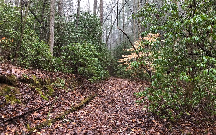 LOT 5  HEMLOCK TRAIL