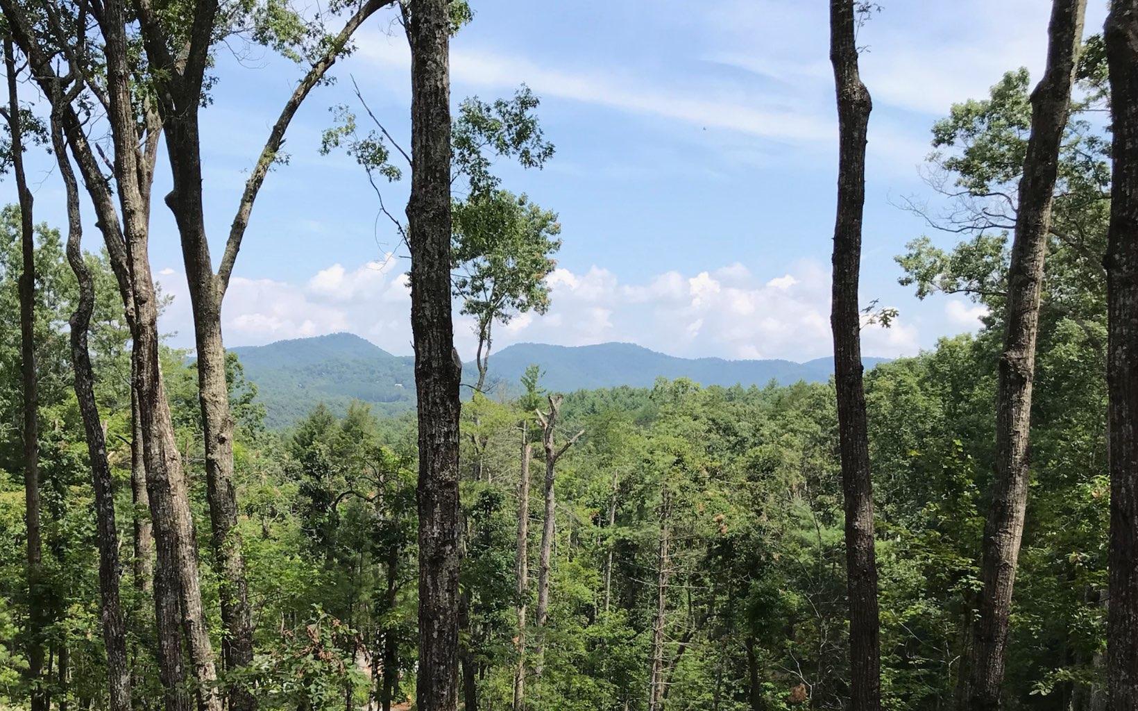 TR 16  ASKA FOREST TRAIL