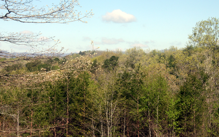LOT 3  COHUTTA OVERLOOK DR