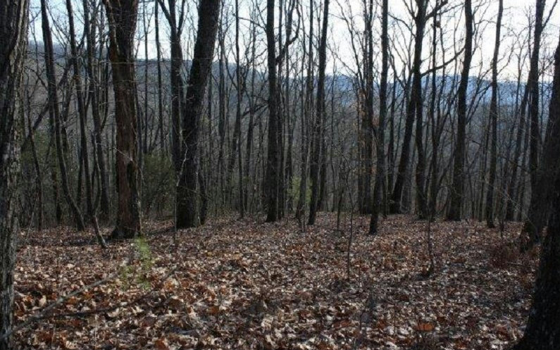 147AC  RALSTON CREEK TRAIL