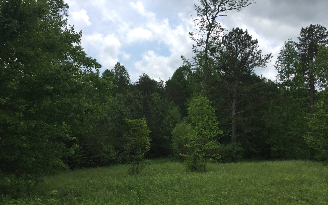 LOT 8  LITTLE SUGAR CREEK