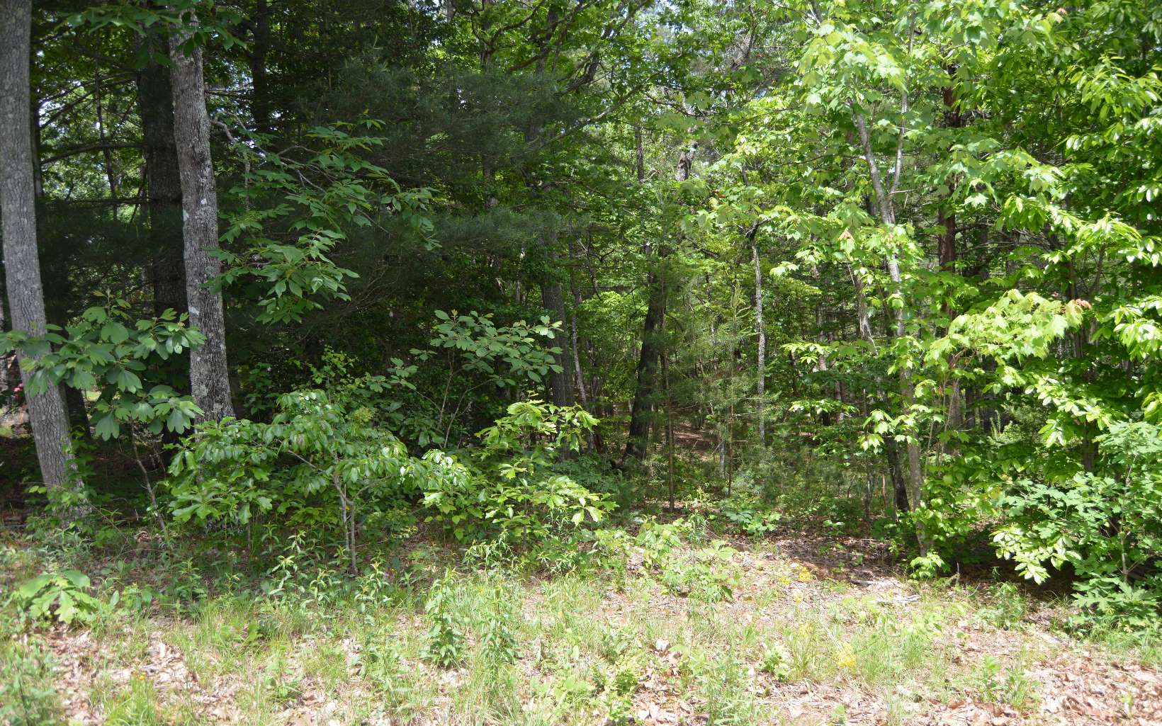 MAPLE SPRINGS LOT 11