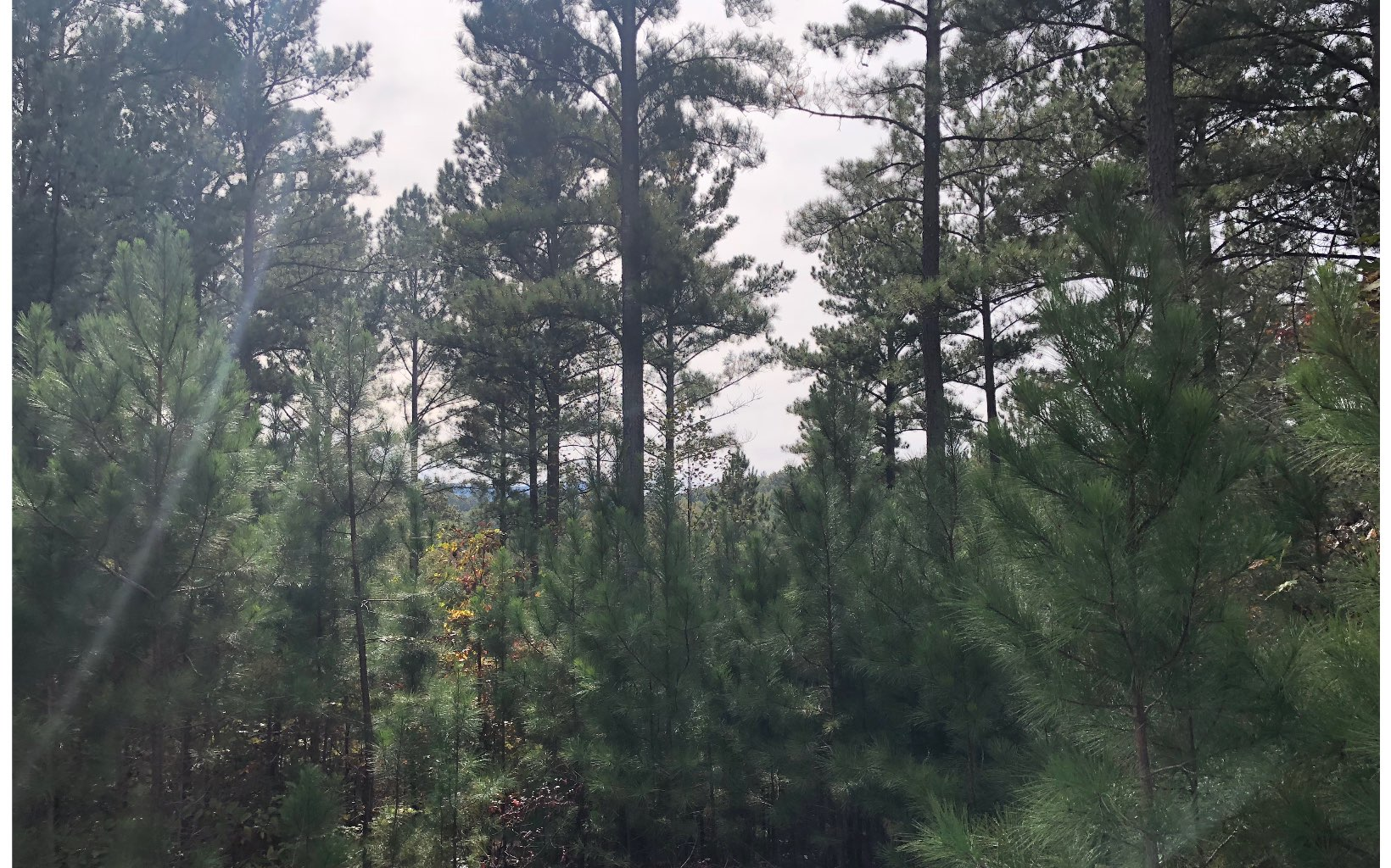 80  TREE LINE DR