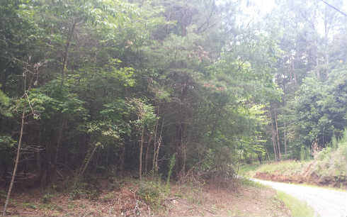 3.5AC  NEW LIBERTY TRAIL, ELLIJAY, GA