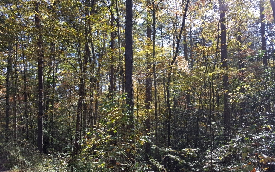 2LOTS  HEMLOCK TRAIL