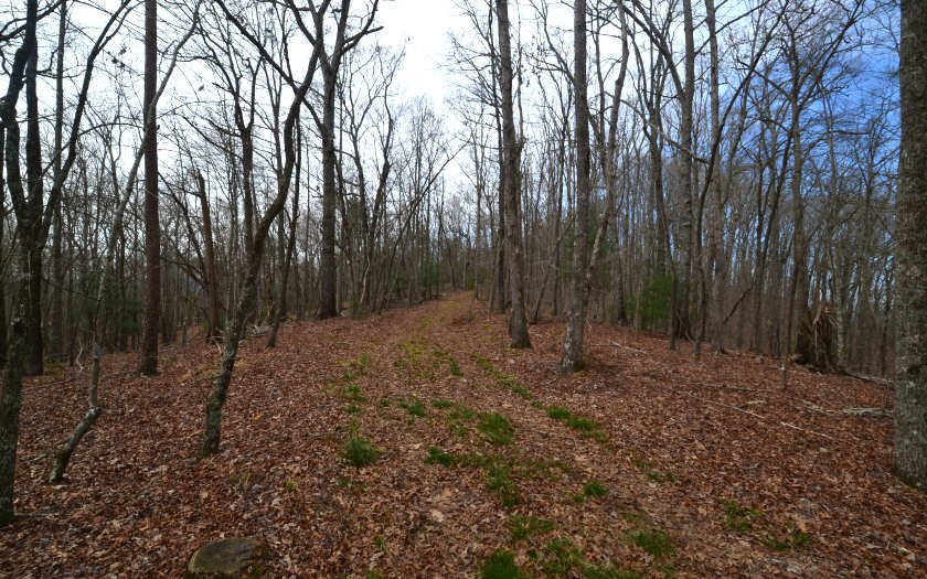 A  HIGHLAND FOREST