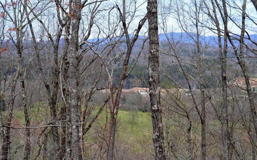 B  HIGHLAND FOREST