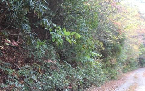 5.25 CLAY CIRCLE ,Morganton,Georgia 30560,Georgia Mountain Acreage,Acreage,North Georgia Real Estate,263567Gary Ward