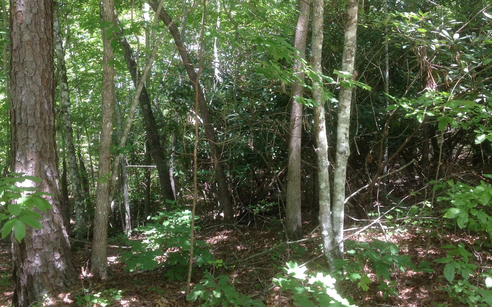 LOT 9  PENLAND INDIAN TRAIL