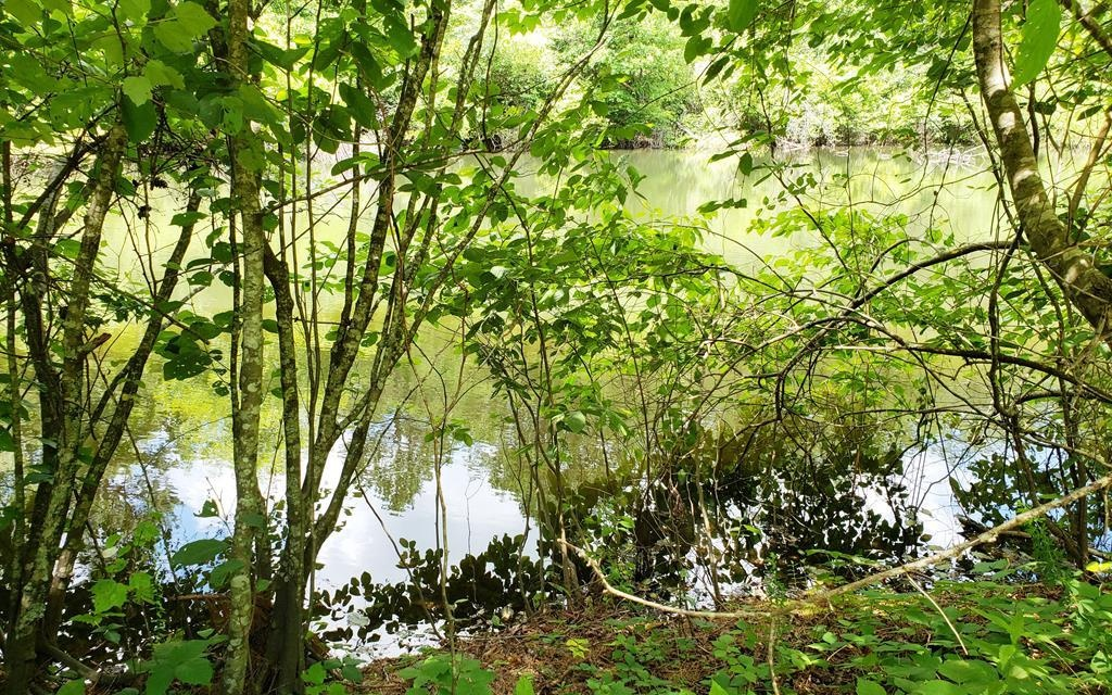 BUILD YOUR DREAM HOME HERE! 3+ Acres of Gently Sloping Land with Huge Spring-Fed Private Pond waiting for your Perfect Mountain Home. Ready to Build on Right Now! Water, Septic System and Power already in place. Plenty of Room for the Kids, Garden or Horses. Just Minutes from Downtown Murphy, Shopping and Casino. Properties like this are a Rare Find in the Area. You Own the Entire Pond. Could be subdivided into several building lots, or Create Your Own Family Compound. Great Place for Family Get-Togethers. Easy Year-Round Access. MUST SEE TO APPRECIATE!