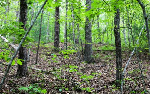 Ga. Mountain farm for sale 6+ACS SCOTS GLEN,Mineral Bluff,Georgia 30559,Acreage,SCOTS GLEN,264271 ,farmland for sale ],farm real estate Advantage Chatuge Realty