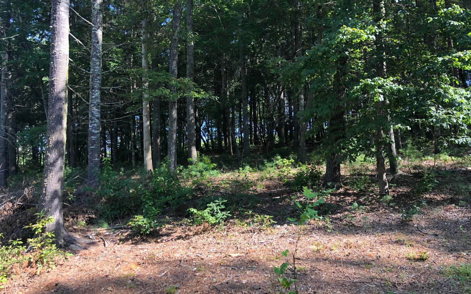 LOT23  FOX LAKE ROAD