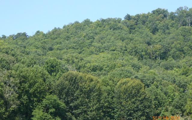 LT 7D  MOUNTAIN HARBOUR