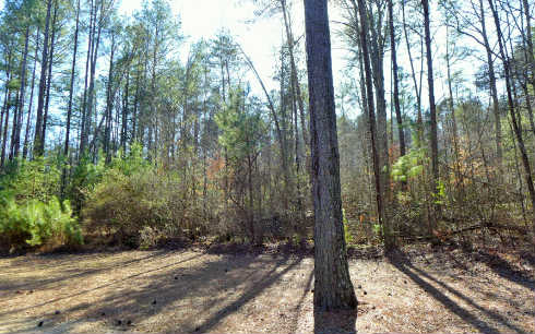 4.6AC  CLEAR CREEK WOODS, ELLIJAY, GA