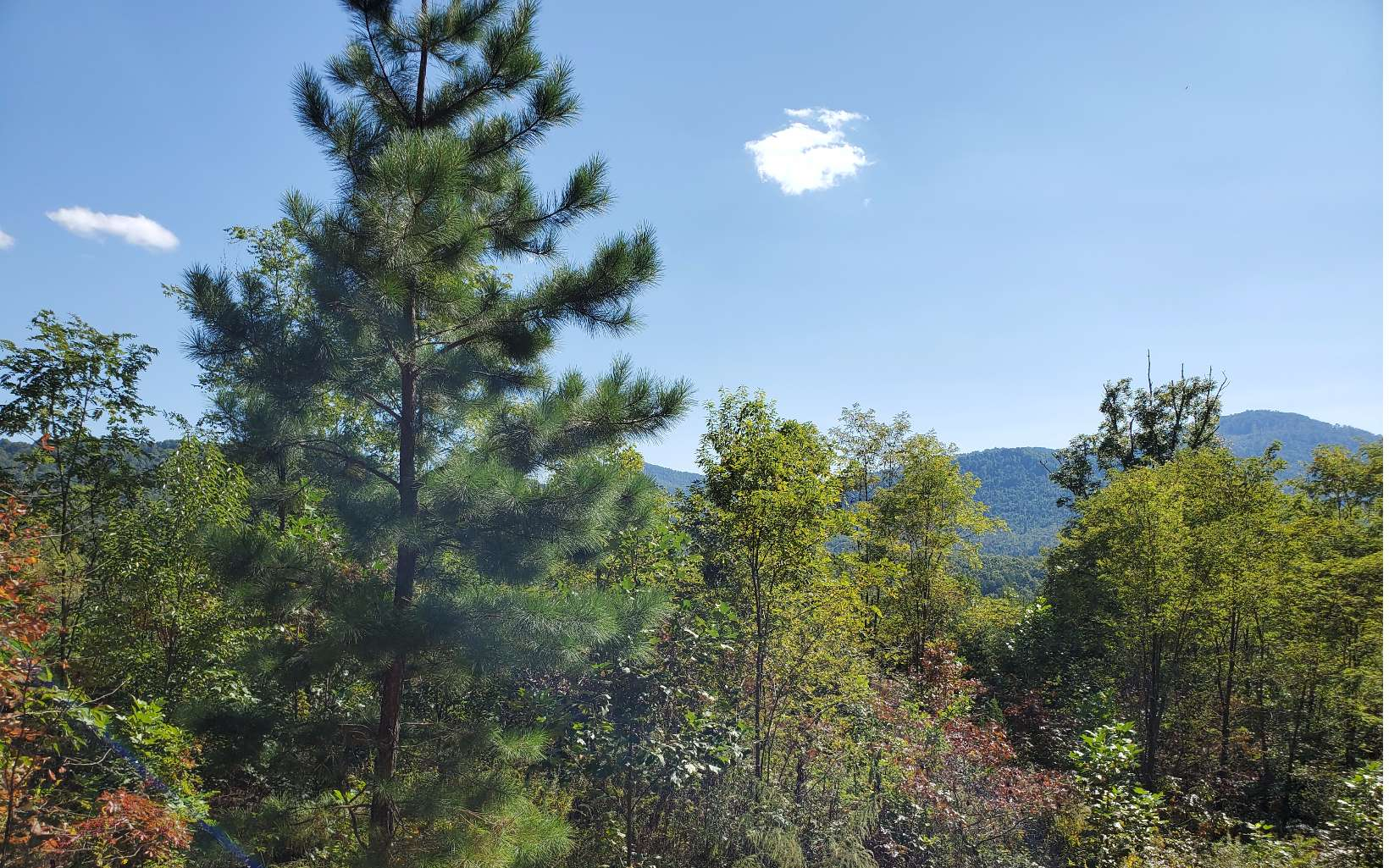 19  CHIMNEY TOP TRAIL