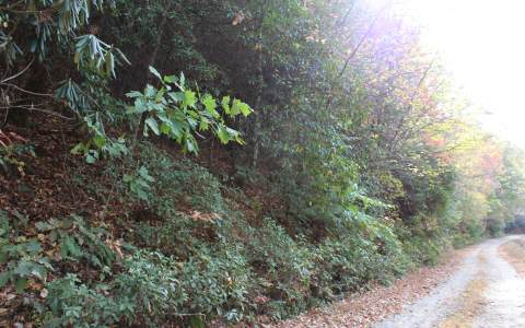 6.15 CLAY CIRCLE,Morganton,Georgia 30560,Georgia Mountain Acreage,Acreage,North Georgia Real Estate,263587Gary Ward