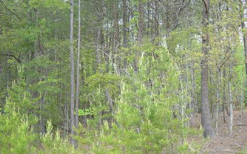 LOT 93 THE SANCTUARY, BLAIRSVILLE, GA