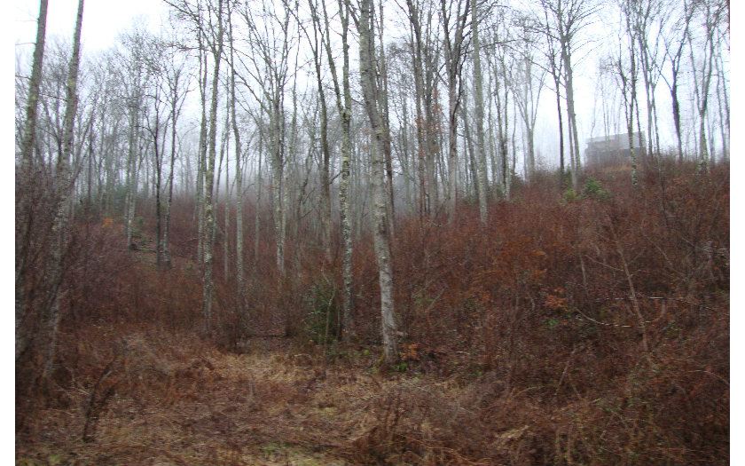 Mountain Property LT 92 FIVE FORKS,Murphy,North Carolina 28906 ,Vacant lot For sale,Vacant lot,FIVE FORKS,267291 Real Estate