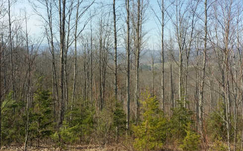 KNIGHTS CONN LOT 11, BLAIRSVILLE, GA