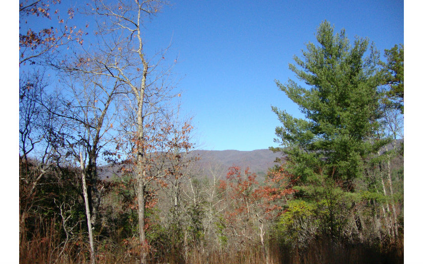 NC mountain property LT 61 OUR HIDDEN MOUNTAIN,Murphy,North Carolina 28906 ,Vacant lot For sale,Vacant lot,267399 mountain real estate